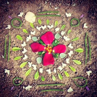 Garden Mandala No. 38 Every day there's something new to use. #spring #gardening #flowers #mandala #flowerstagram #landart #gardenartflowers #gardenartflowers #square #cinquefoil #locust #lantana #roses #petals #leaves #catkins | by SarabellaE / Sara / Love in the Suburbs