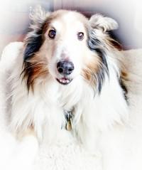 Week 13 - Portrait: High Key #dogwood52 #dogwoodweek13