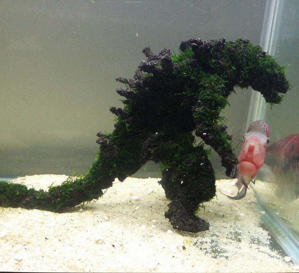Fish tank vs aquarium -  Mosszilla Vs Flowerhorn Monster 2016 Godzilla Aquarium Fish Plantedtank Fishtank
