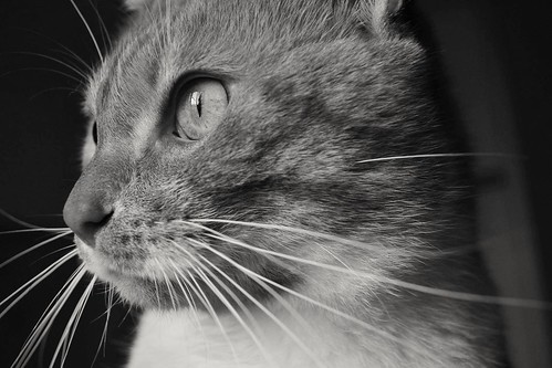 #cat #petlovers | by janfer241