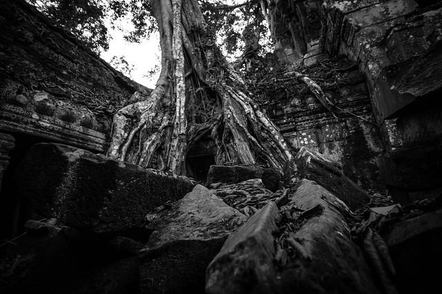 Ta Prohm - Angkor - Cambodia