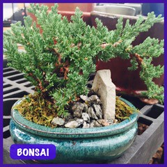 Bonsai —Brian Wheat, AAF, PFCI, of Lafayette Florist, Gift Shop & Garden Center in Lafayette, Colorado | by Flower Factor