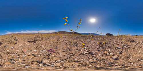 "Death Valley ""Super Bloom"" 2016 in #VR. 
