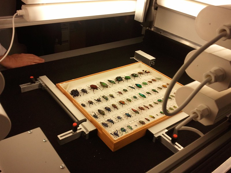 Digitisation of the Naturalis Biodiversity Center's collection in Leiden, THE NETHERLANDS