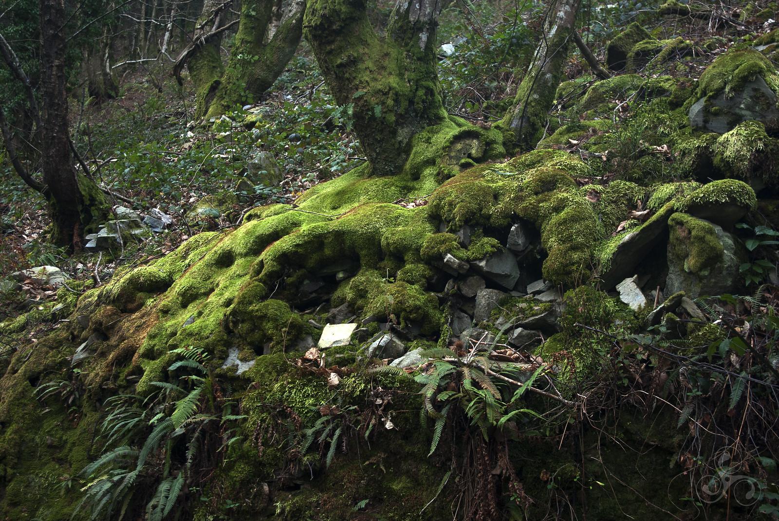 moss | stones