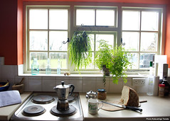 Hanging Plants with Root Pouch