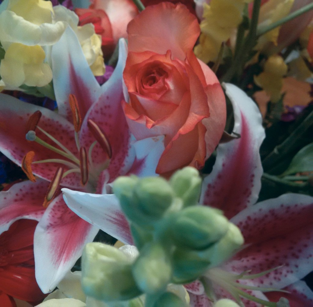 Birthday Flowers From A Friend Suzanna Panda Flickr