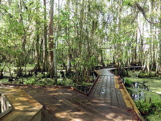 Barataria Preserve | by scook48227