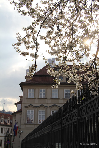 Polish Embassy & Budding Trees | by mlanza