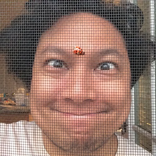 Ladybug on screen door