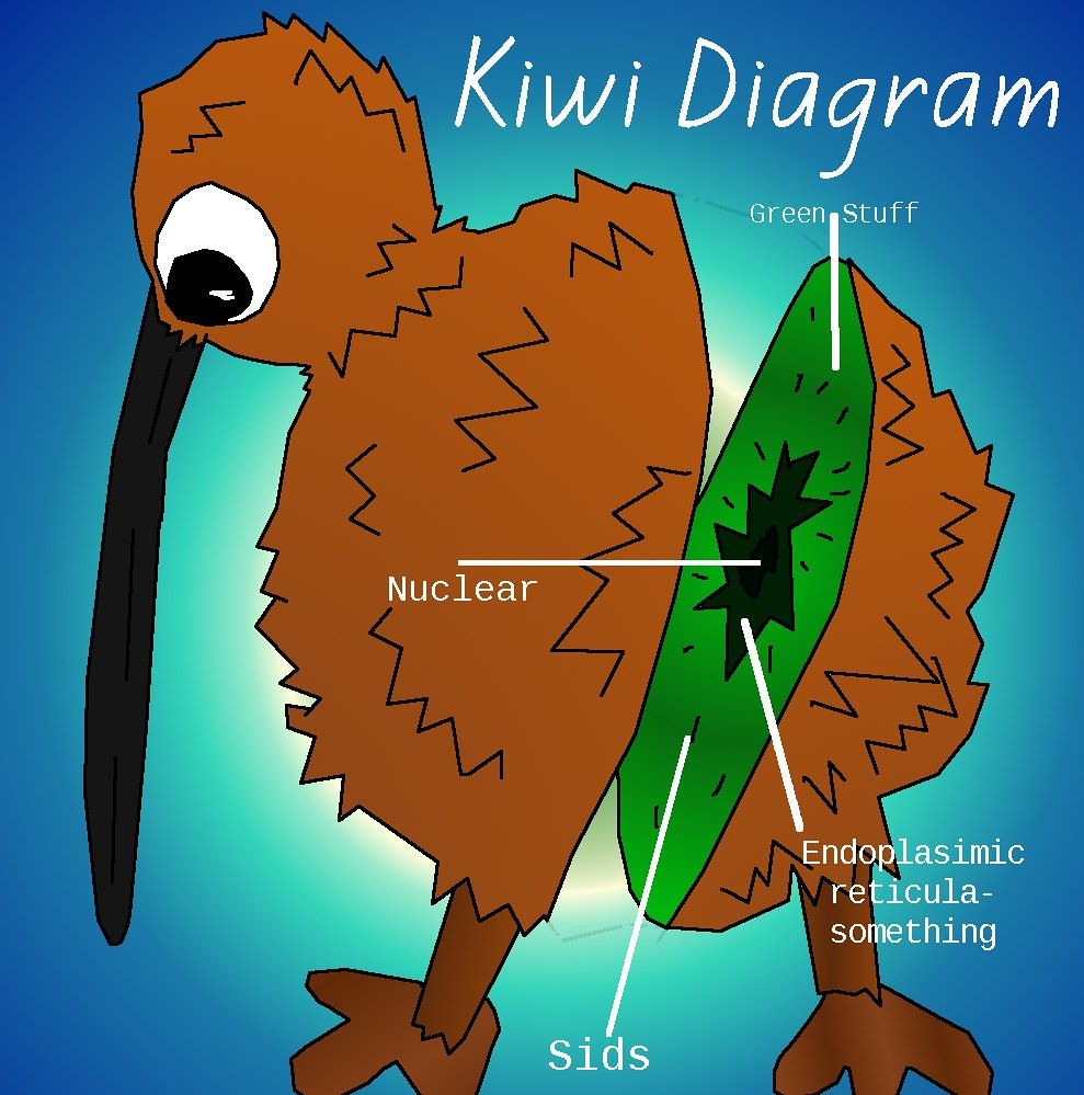 Diagram Of Kiwi Bird - Search For Wiring Diagrams •