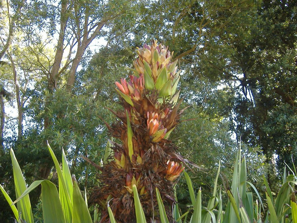 Aloe In Giardino giardino botanico a sf. | natalia bannikova | flickr