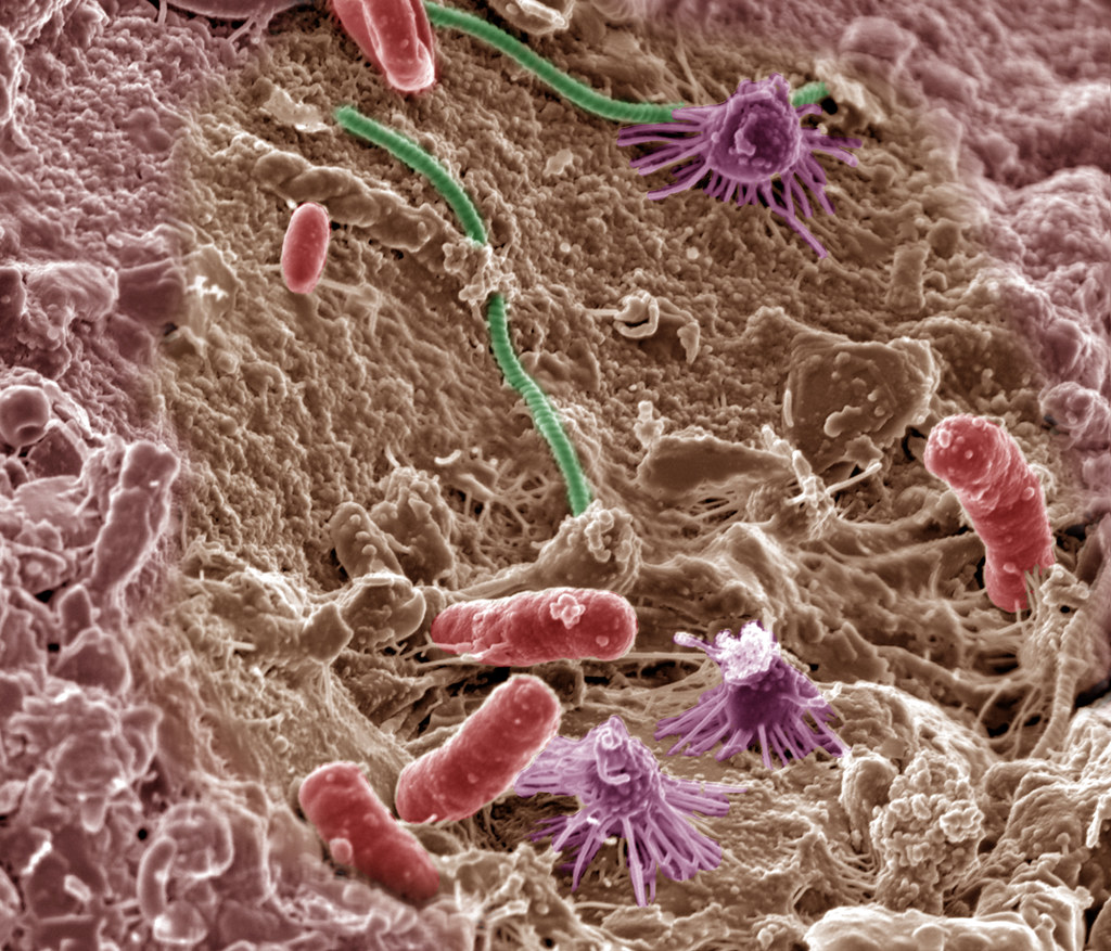 Image result for soil microbes