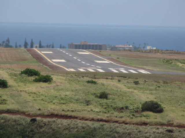 starr-110412-5145-Ananas_comosus-abandoned_fields_view_Kapalua_Airport_and_runway-Kahana_West_Maui-Maui