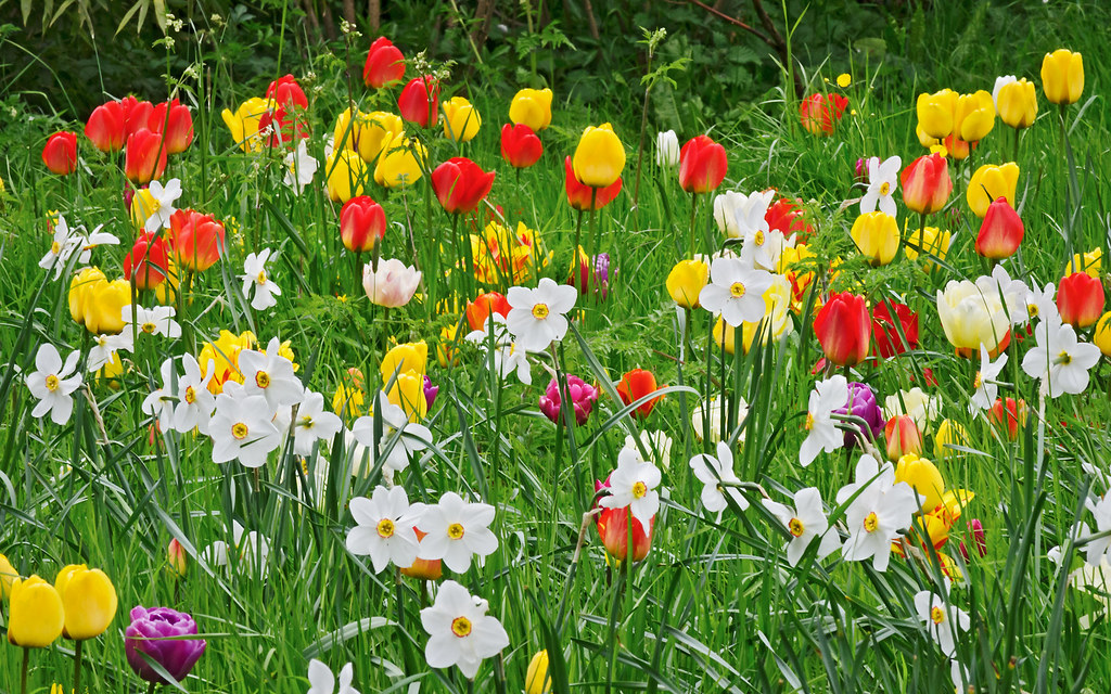 Happy easter spring flowers at ascott house gardens bu flickr spring flowers at ascott house gardens buckinghamshire england by mightylinksfo