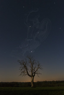 Orion et son arbre - EOS760d - Samyang16mm_20160323-b | by frankastro