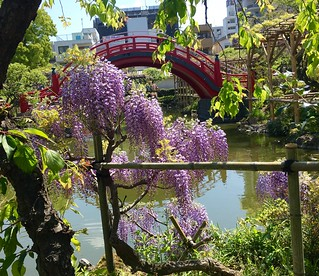 Wisteria at Kameido Tenjin | by Manish Prabhune