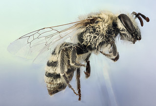 Winter Bee | by U.S. Geological Survey