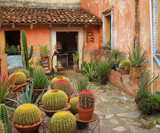cactus au mexique mexique un petit patio flickr. Black Bedroom Furniture Sets. Home Design Ideas