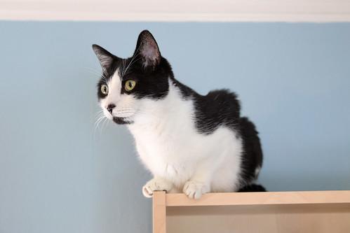 Literary Cat Names List