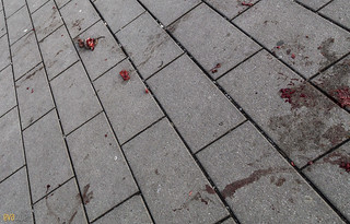 dead rat in the plaza berlin 1 | by Eva Blue