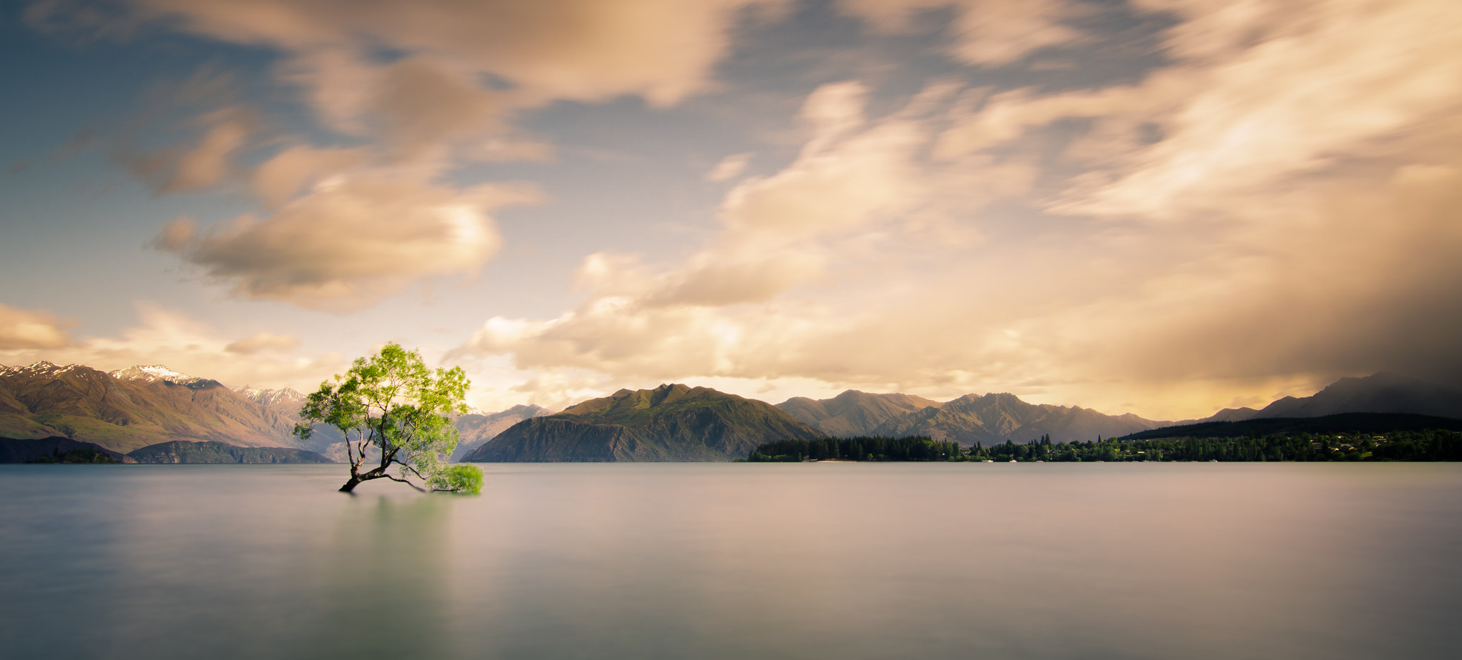 The Lonely Tree | by Kiwi Tom