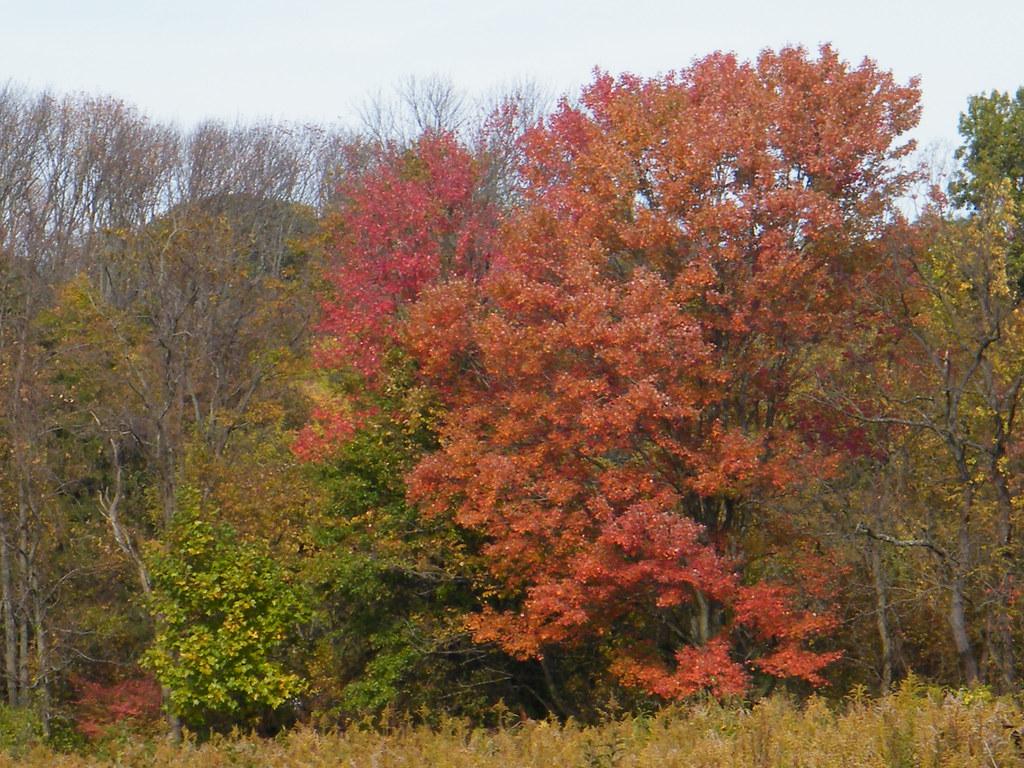 Longwood Gardens. Kennett Square Pennsylvania on the borde… | Flickr
