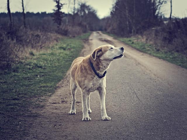 Image d'un chien réalisée avec un Sigma 60mm f2.8