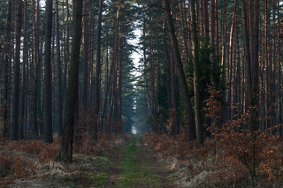 Dark and deep forrest | by Jeena Paradies