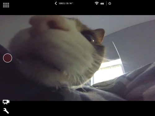GoPro Session remote app screenshot with Amelia #cat