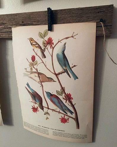 Bird Print Wall Gallery Project | by A Storybook Life