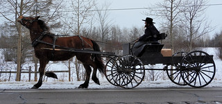 Profile Amish Horse & Carriage - Sault Ste. Marie - Upper Peninsula - Michigan | by Mikel Classen