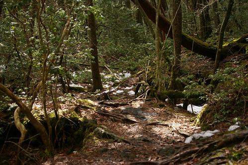 西湖野鳥の森公園