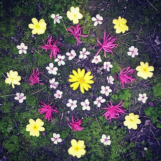Garden Mandala No. 1  #waldorfhome #winter #winterturnstospring #flowers #mandala | by SarabellaE / Sara / Love in the Suburbs