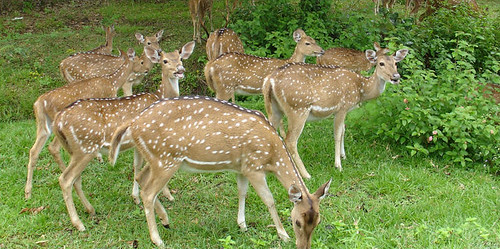 Aralam-Wildlife-Sanctuary | by Kerala Tour Packages
