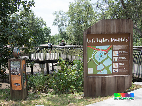 Explore the mudflats at Sungei Buloh