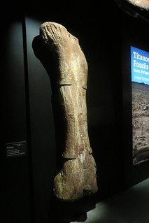 Titanosaur Femur | Unlike the bones in the skeleton, this ...