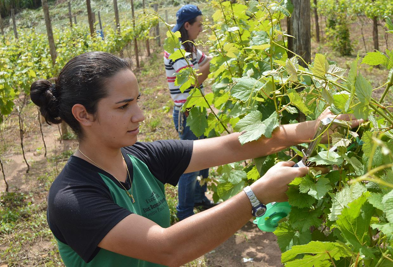 Empresários conhecem projeto de curso  de produção de vinhos em Etec de Jundiaí