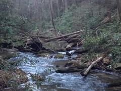 Dukes Creek Logjam