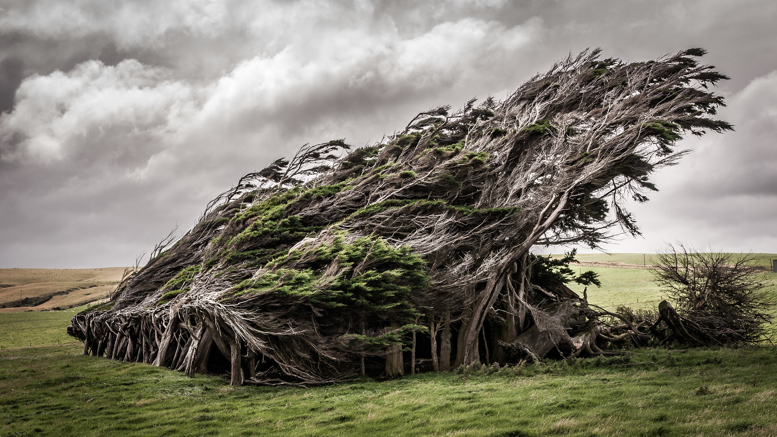 The Windswept Trees at Slope Point