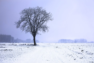 Solitary snow tree | by Lenny K Photography