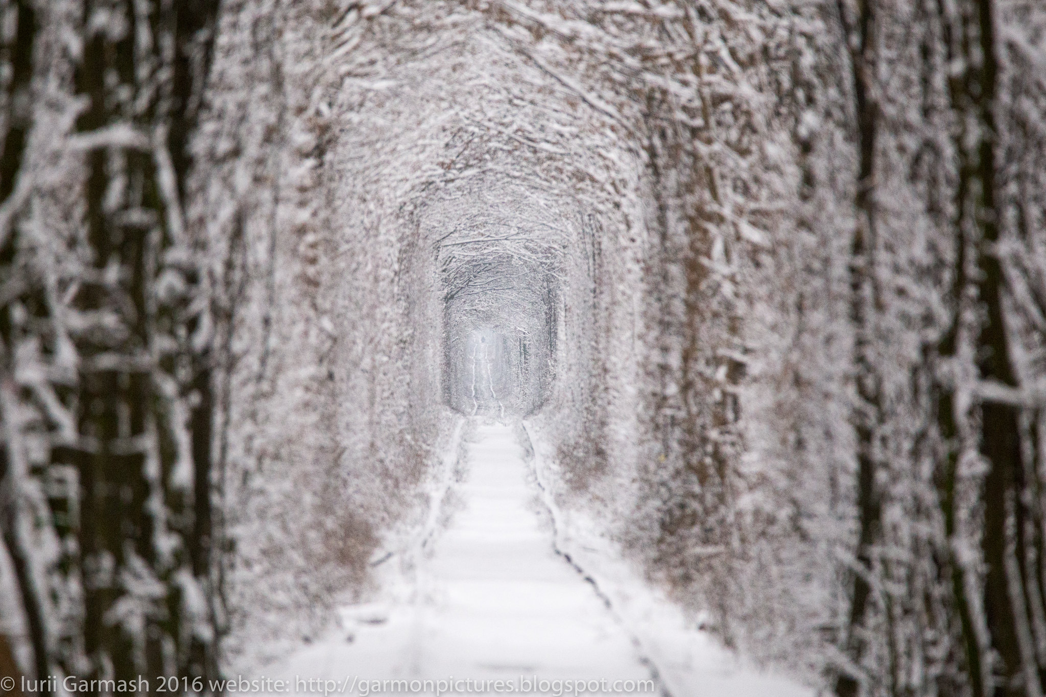 Klevan Tunnel of Love at winter time.