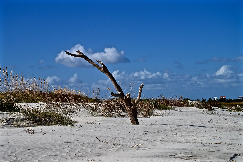 North Beach - Hunting Island SC | This unique beach is famou