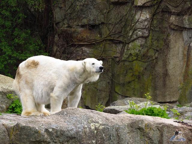 Zoo Berlin 29.04.2016   021