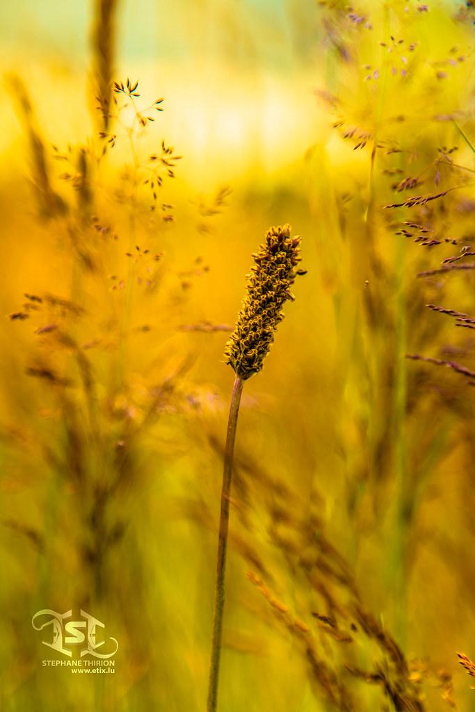 Nature Et Lumiere nature et lumière jaune / nature and yellow light | nature e… | flickr