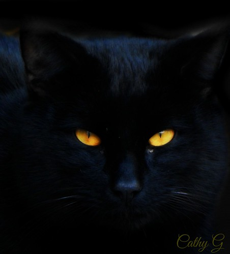 Black Cat | by guarnc