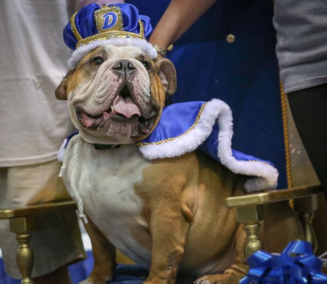 Drake University Beautiful Bulldog Contest 2016