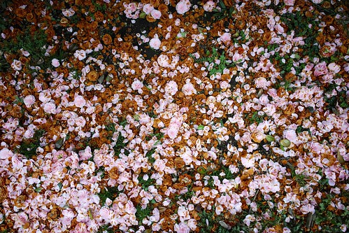 DP0Q4259 | by shio