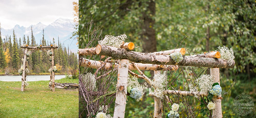 Birch Wedding Arbour | by Dan Stanyer (Northern Pixel)