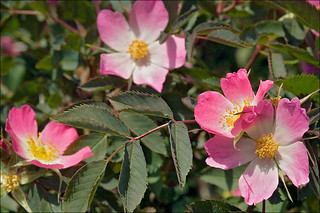 Image Result For Glaucous Color Code